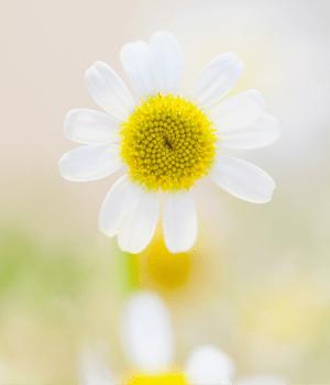 Optimum-You-by-Barbara-Birke-spring-renew-course